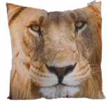 Lion Photo Design Cushion